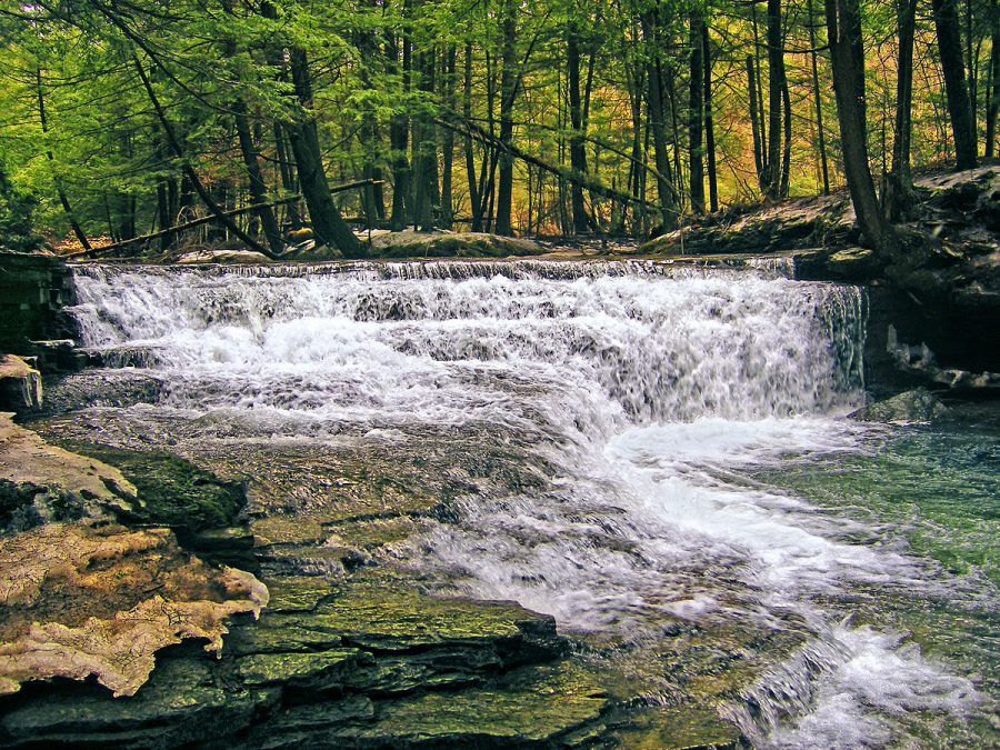 Fall Brook, Salt Springs State Park, Susquehanna County, Pennsylvania (16 March 2008)